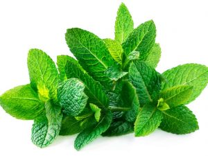 beautiful fresh mint can not do but good