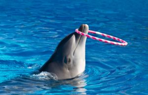 a dolphin with playing with a hoop in a pool